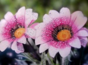 ilustracion-aerografia-trabajos-alumnos-academia-c10-aerografo-hiper-realismo-flores-pintura-realista